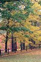 Image Ref: 1212-05-63 - Fall Color, Walden Pond, Massachusetts, Viewed 5910 times