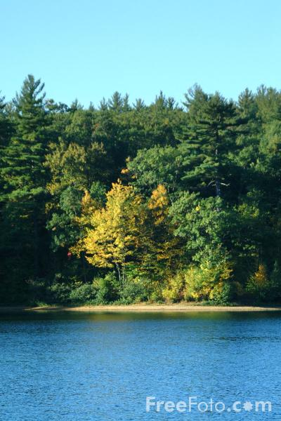 Picture of Walden Pond, Massachusetts - Free Pictures - FreeFoto.com