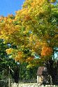 Image Ref: 1212-07-63 - Fall Color, Minute Man National Historical Park, Massachusetts, Viewed 9278 times