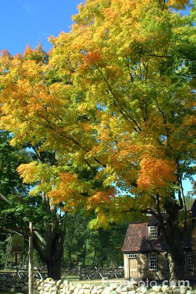 Picture of Fall Color, Minute Man National Historical Park, Massachusetts - Free Pictures - FreeFoto.com
