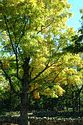 Image Ref: 1212-07-67 - Fall Color, Minute Man National Historical Park, Massachusetts, Viewed 9240 times