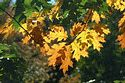 Image Ref: 1212-07-6 - Fall Color, Minute Man National Historical Park, Massachusetts, Viewed 9554 times