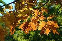 Image Ref: 1212-07-7 - Fall Color, Minute Man National Historical Park, Massachusetts, Viewed 9614 times