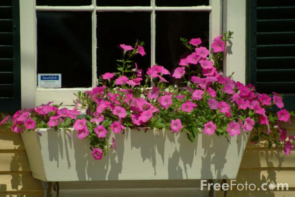 Picture of Window Box, Plymouth, Massachusetts - Free Pictures - FreeFoto.com