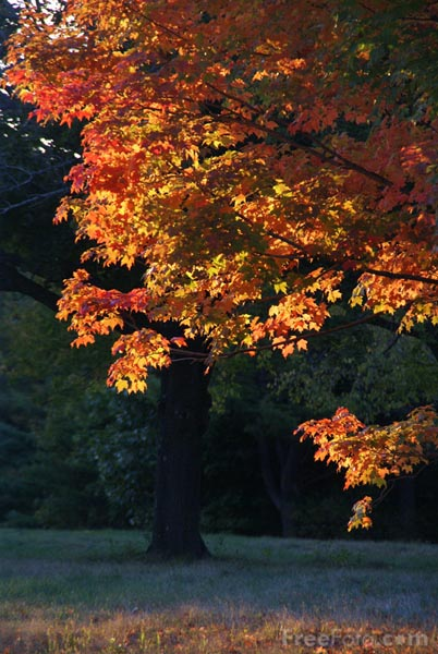 Picture of Fall Color, Massachusetts, USA - Free Pictures - FreeFoto.com