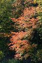Image Ref: 1213-02-66 - Fall Color, Taftsville, Vermont, Viewed 5886 times
