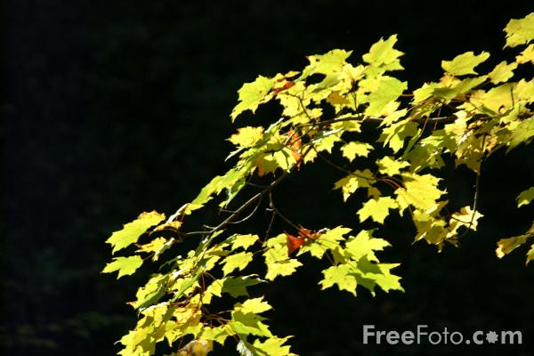 Picture of Fall Color, Woodstock, Vermont - Free Pictures - FreeFoto.com