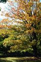 Image Ref: 1213-03-91 - Fall Color, Woodstock, Vermont, Viewed 21714 times