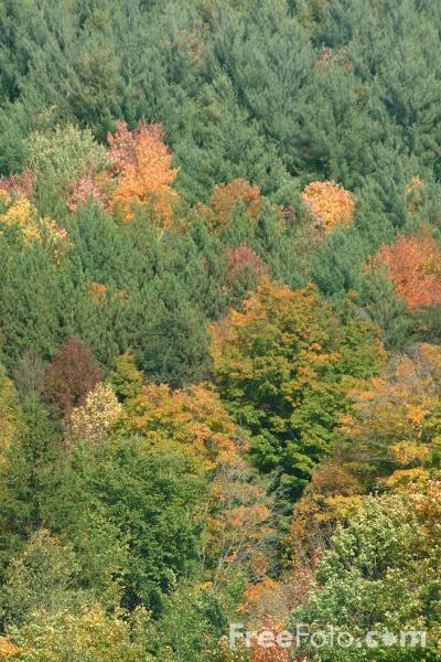 Picture of Fall Color, Route 100A, Vermont - Free Pictures - FreeFoto.com