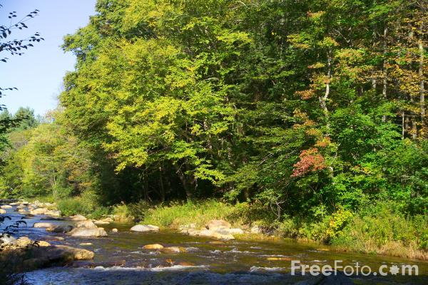 Picture of Cold River, Sandwich, New Hampshire, USA - Free Pictures - FreeFoto.com