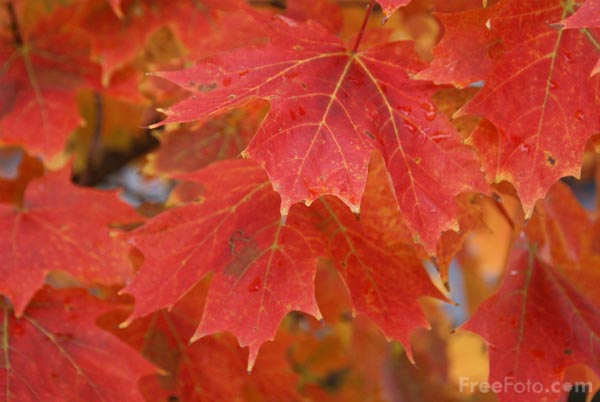 Picture of Fall Color, Ashland, New Hampshire, USA - Free Pictures - FreeFoto.com
