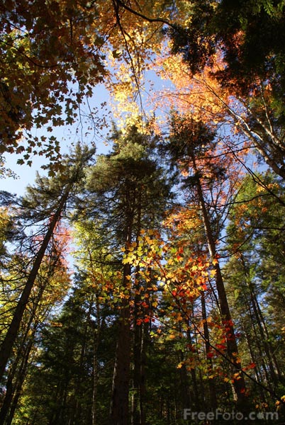 Picture of Fall Color, Kancamagus Highway, New Hampshire, USA - Free Pictures - FreeFoto.com