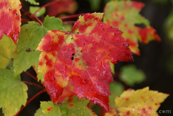 Picture of Fall Color, New Hampshire, USA - Free Pictures - FreeFoto.com