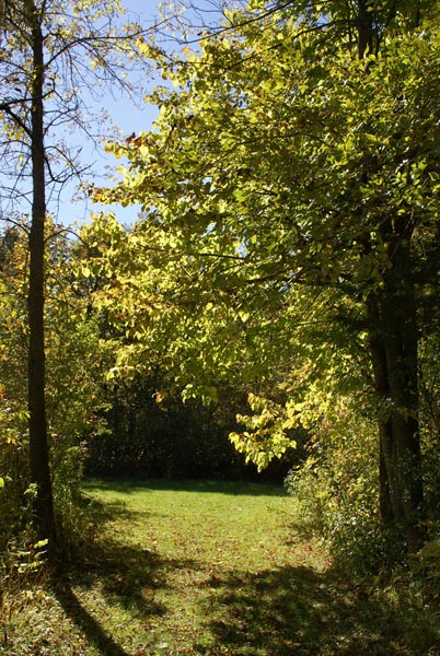 Picture of Mississippi River County Park, Minnesota, USA - Free Pictures - FreeFoto.com
