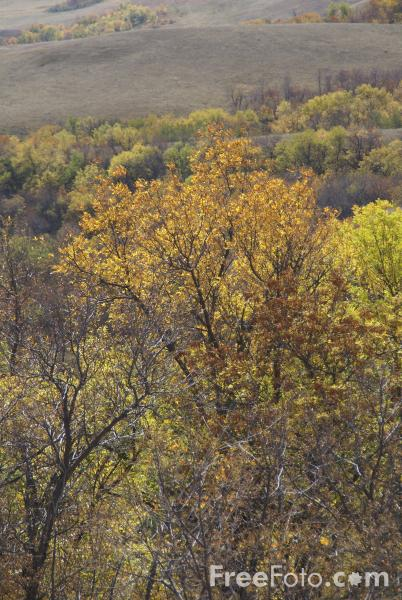 Picture of Fall Color, Great Plains, Montana, USA - Free Pictures - FreeFoto.com