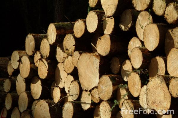 Picture of Lumber - Free Pictures - FreeFoto.com