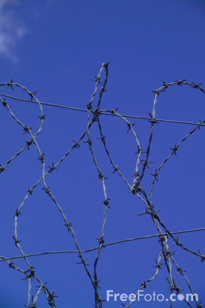 Picture of Barbed wire - Free Pictures - FreeFoto.com