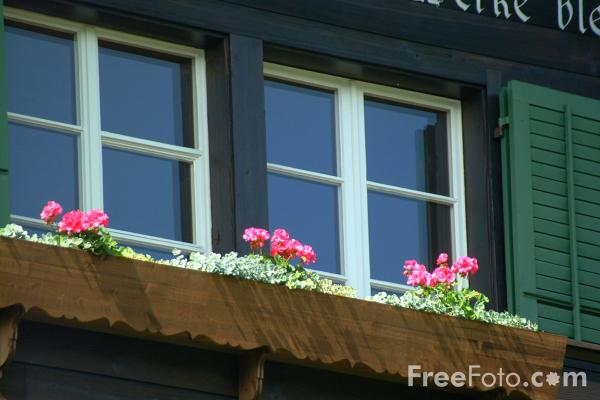 Picture of Window Box, Spiez, Berner Oberland, Switzerland - Free Pictures - FreeFoto.com