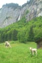 Image Ref: 1302-23-60 - Lauterbrunnen Valley, Viewed 4273 times