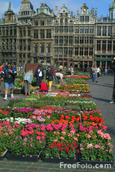 Picture of Flower Market, Grand Place - Grote Markt, Brussels, Belgium - Free Pictures - FreeFoto.com