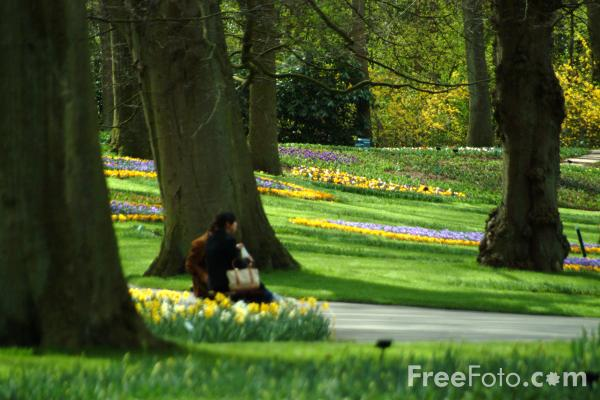 Picture of Daffodils, Keukenhof, Holland - The Netherlands - Free Pictures - FreeFoto.com