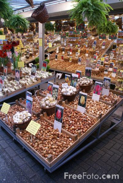 Picture of Bulbs, Flower Market, Amsterdam - Free Pictures - FreeFoto.com