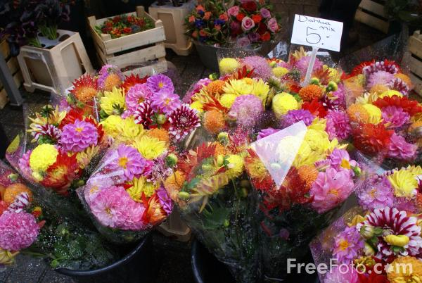 Picture of Flower Market, Amsterdam - Free Pictures - FreeFoto.com