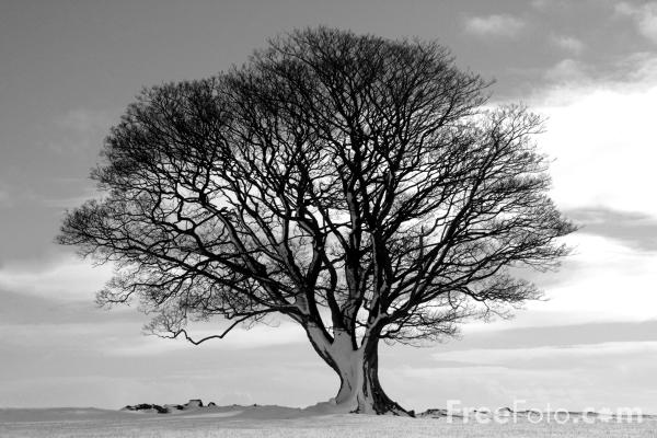 black and white photos of trees