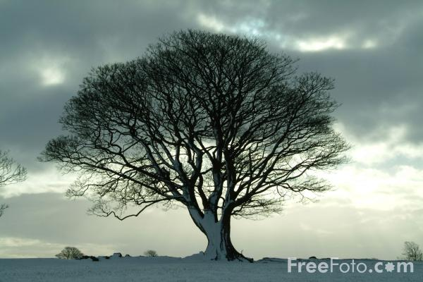 Picture of Tree in Winter - Free Pictures - FreeFoto.com
