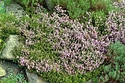 Image Ref: 15-05-18 - Heather, Viewed 12152 times