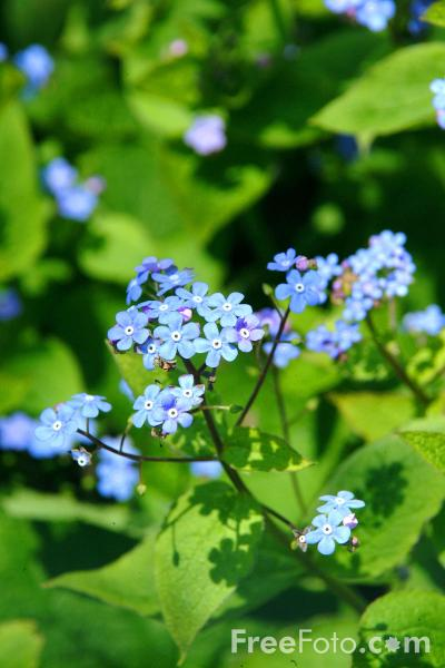 Picture of Blue Flower - Free Pictures - FreeFoto.com