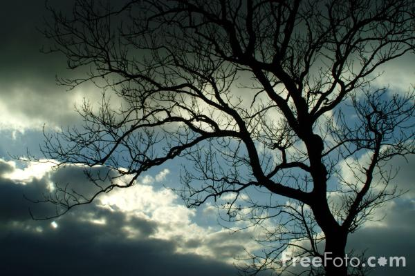 Picture of Trees - Free Pictures - FreeFoto.com