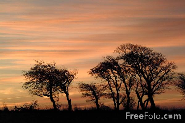 Picture of Sunrise - Free Pictures - FreeFoto.com
