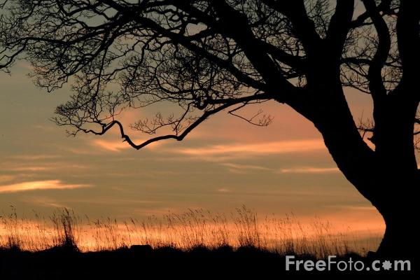 Picture of Tree, Sunrise, Northumberland - Free Pictures - FreeFoto.com