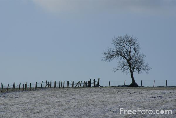Picture of Tree in the snow - Free Pictures - FreeFoto.com
