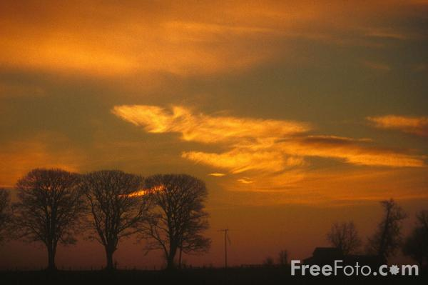 Picture of Trees, Sunrise, Northumberland - Free Pictures - FreeFoto.com