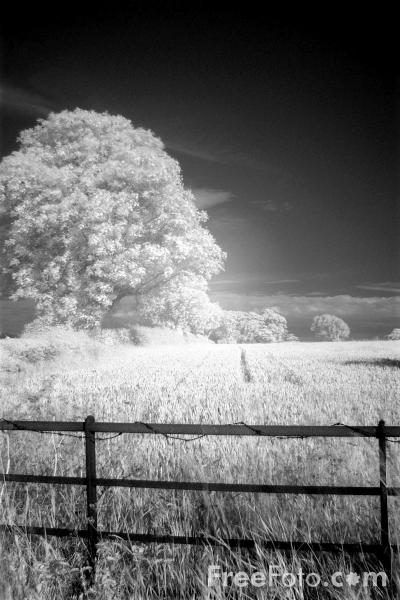 Picture of Tree, Northumberland - Free Pictures - FreeFoto.com