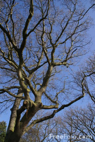 Picture of Tree Branches - Free Pictures - FreeFoto.com