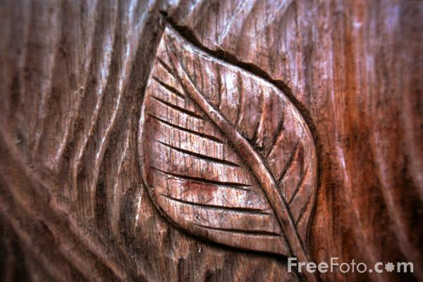 Picture of Forest - Free Pictures - FreeFoto.com