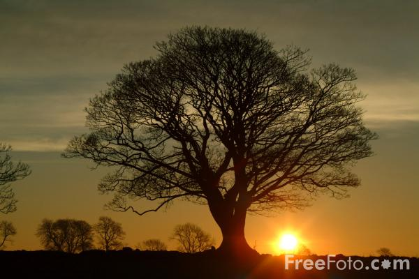 Picture of Sunrise, Northumberland - Free Pictures - FreeFoto.com