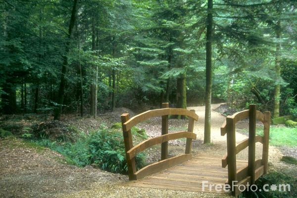 Picture of Footbridge in the New Forest - Free Pictures - FreeFoto.com