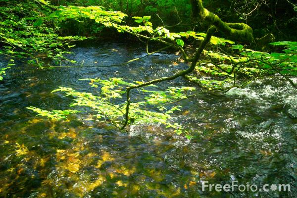 Picture of Stream - Free Pictures - FreeFoto.com