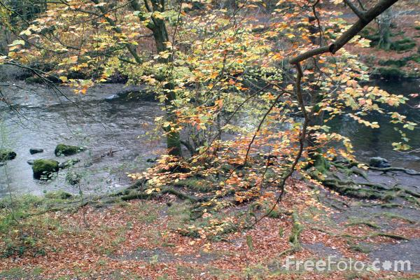 Picture of River Brathay, Skelwith Bridge, Cumbria - Free Pictures - FreeFoto.com