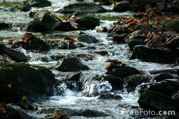Picture of Mountain Stream - Free Pictures - FreeFoto.com