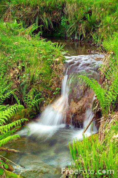 Picture of Stream of Water - Free Pictures - FreeFoto.com
