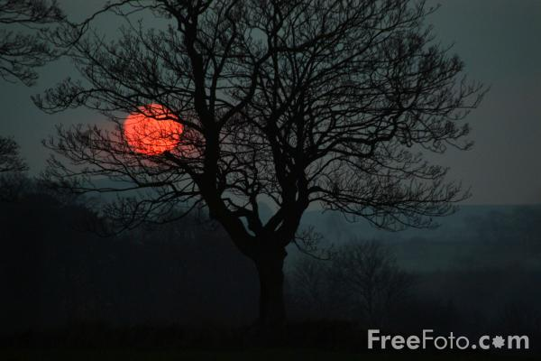 Picture of Sycamore Tree, Northumberland - Free Pictures - FreeFoto.com