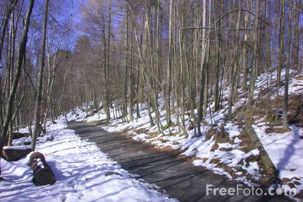 Picture of Footpath - Free Pictures - FreeFoto.com