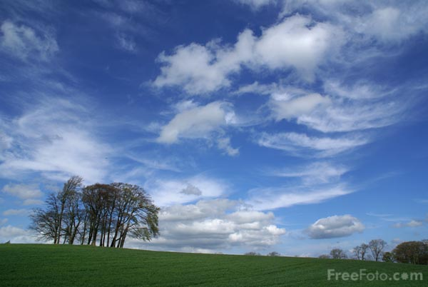 Picture of Copse of Trees - Free Pictures - FreeFoto.com