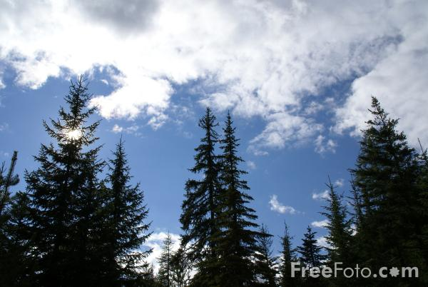 Picture of Forest of Trees - Free Pictures - FreeFoto.com