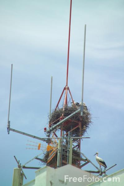 Picture of Stork Nest and Cell Tower - Free Pictures - FreeFoto.com